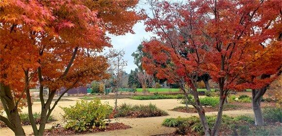 Holbrook Palmer Park Trees